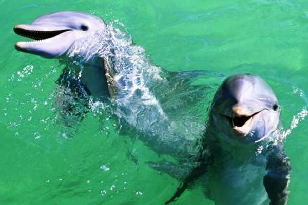 The Earth Island Institute continues to warn against the resumption of live dolphin export, saying it will negatively impact the fishing industry.