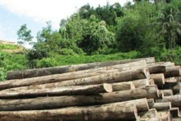 The logging industry contributes well over 30% of the country's GDP.