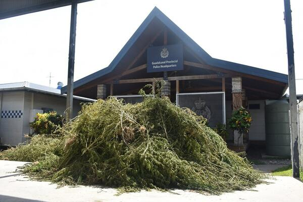"""The uprooted marijuana plants are believed to be valued at between $500,000.00 and $1 million if sold in the local market,"" says PCIO Nevol."