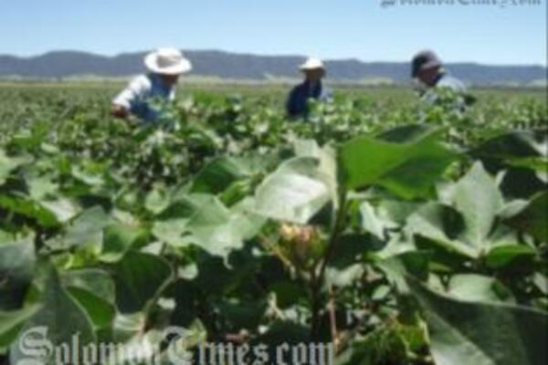 The recruiting agents can begin recruiting locals to work as seasonal labourers for farms in Australia.