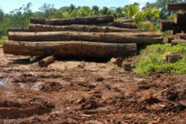 Parliament saw fit to establish an Authority given the projected drop in the country's GDP if commercially valuable forests are logged out.