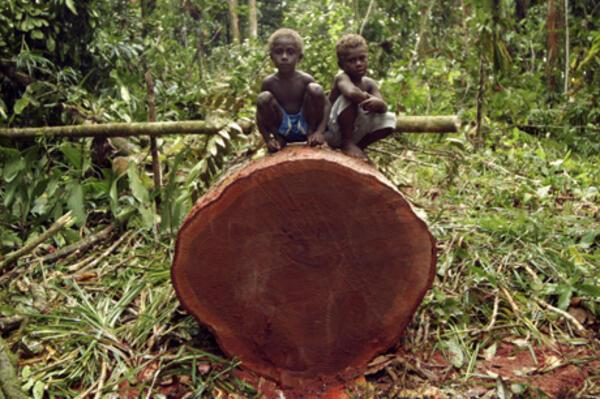 Logging in the Solomon Islands has been running at   more than the sustainable rate.