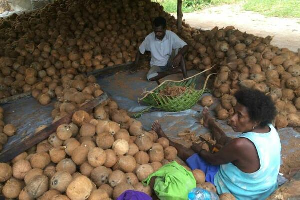 Despite their importance to the national economy and to rural households, there has been little investment in coconut production in recent decades.