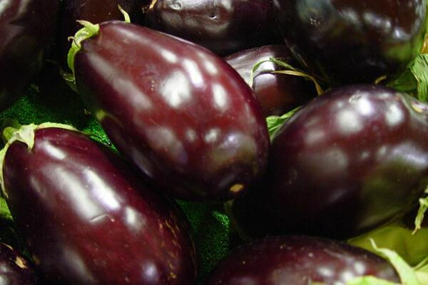 Eggplants, like many other vegetables, are good sources of dietary fiber, a necessary element in any balanced diet.