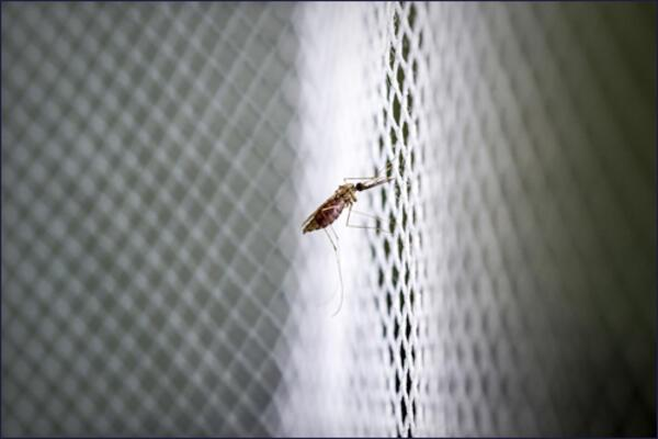 He says such behavior shows that they may be adapting and avoiding treated bed nets, raising the need to combat these deadly mosquitoes outdoors.