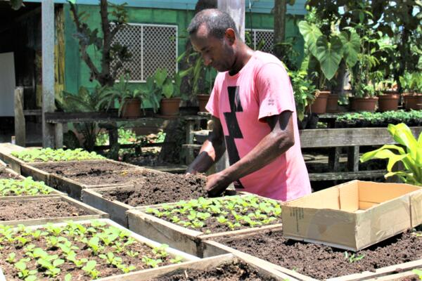 Better seed systems for the Solomon Islands! PHAMA Plus has partnered with Kastom Gaden Association to help address food and nutrition security concerns in the country by improving seed distribution and support systems for increased agricultural production.