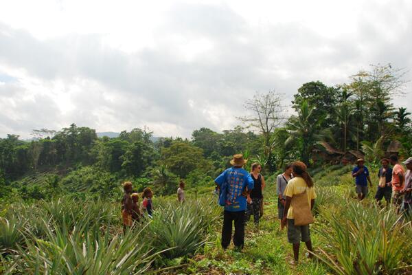New Colombo Plan students from University of Sydney visit Malaita pineapple farm.