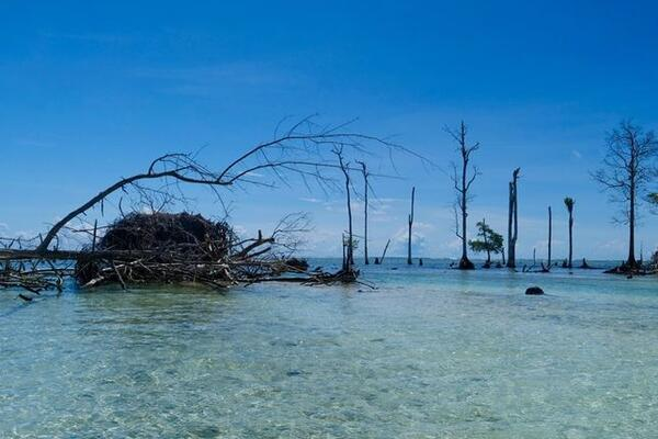 The remnants of 300-year-old trees which once stood tall, but are now all but drowning, prove the point.
