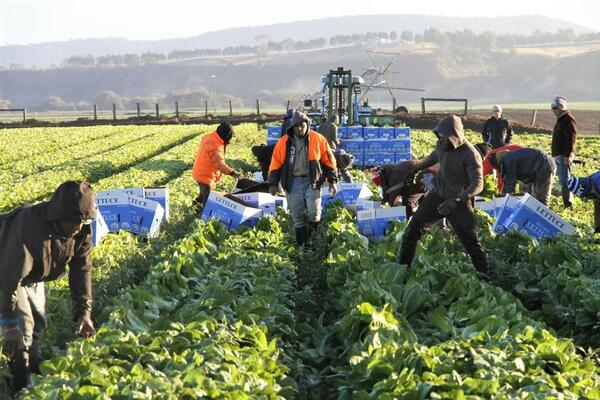 """A major 2017 University of Adelaide study funded by horticulture industry associations found that """"[t]he SWP results in less exploitation of workers … when compared with other low-skilled visa pathways"""", such as backpackers."""