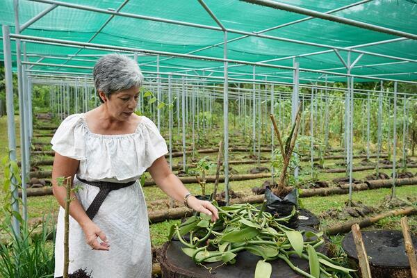 Organic Vanilla farmer, Shelley Burich, works on her farm at Vaoala.