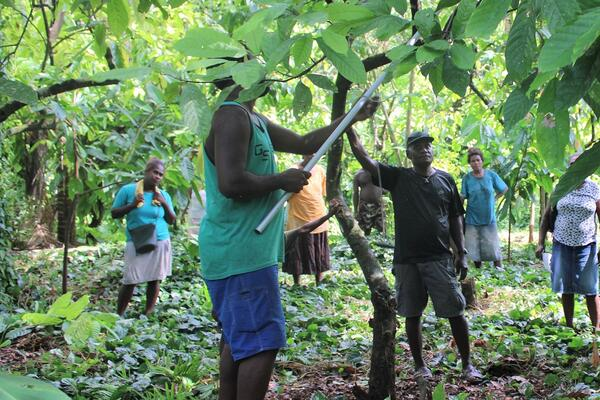 Training is being provided by Robert Waisu, a local cocoa specialist and trainer.