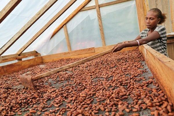 The facility will support existing production in cocoa, copra, kava, noni, cassava, and other export commodities.