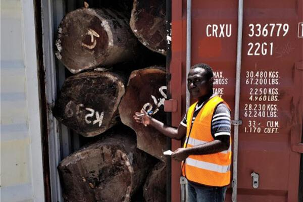 This is the second time in the recent past certain loggers have tried to evade tax by loading round logs into containers for export. In November 2019, twenty containers were seized by customs after it was discovered that they were full of kwila round logs.