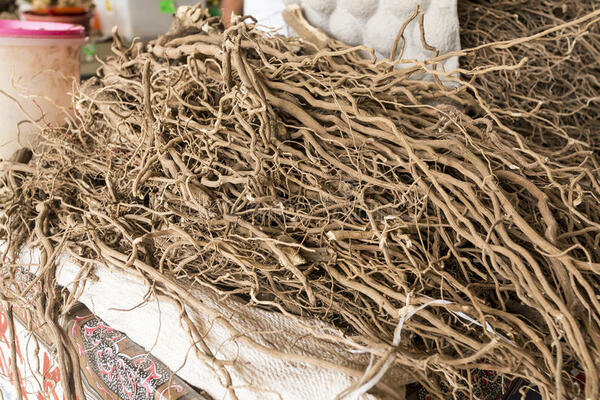Kava Export High on Government Agenda