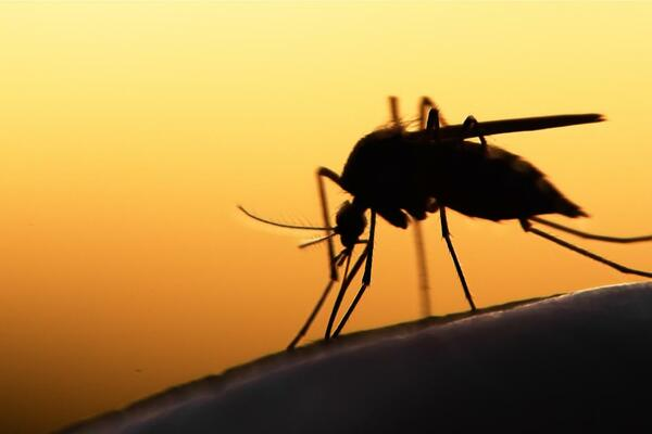 In the Asia-Pacific (APAC) region, which is home to 60% of the world's population, most countries have made tremendous progress against the disease, reducing malaria cases by half since 2010. Today there are a staggering 89% fewer deaths from malaria than 10 years ago.