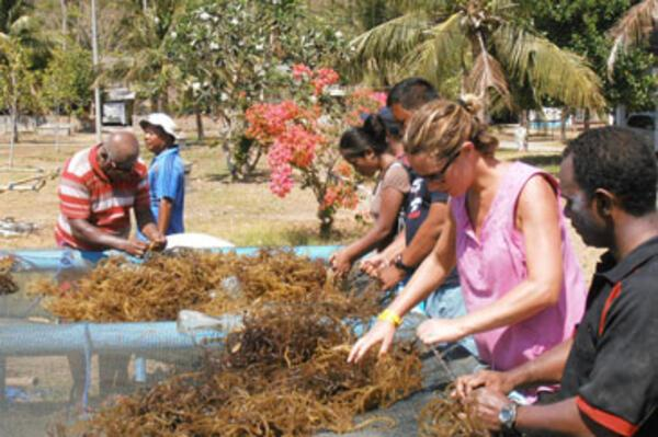 SPC Supports Seaweed Farming in the Pacific Region