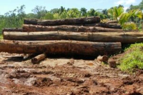 The report states that macroeconomic performance has been favorable owing to strong agricultural and logging production as well as a large mining investment.