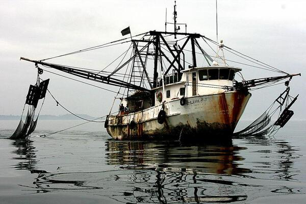 The IUU Regulation is the EU's main tool in the fight against illegal fishing.