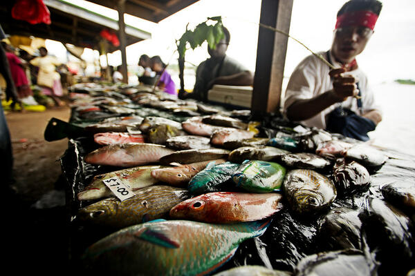 MPs Urged to Focus on Agriculture and Fisheries