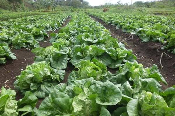 Unemployed Youths Start Organic Farm