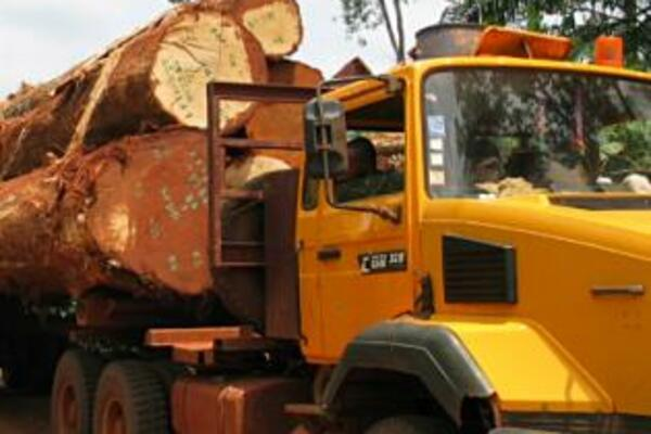 TSI encourages the Ministry to ensure that leaders, administrators and loggers do not escape the law.
