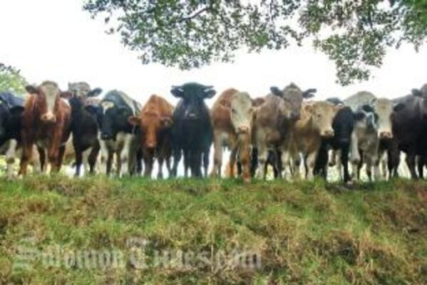 Despite difficulties, government is hopeful that the cattle project will be implemented during the course of 2010.