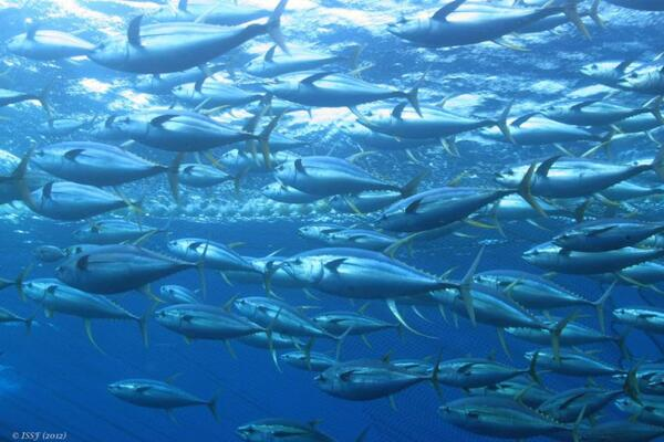 Pacific Island countries have worked with fishing nations to secure crucial protection measures next year for an industry worth over US$1 billion to local economies and employing around 24,000 following global meetings last week.