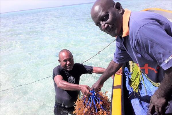 Chief Fisheries Aquaculture Officer Wesley Garofe and John Bakeleng Provincial Fisheries Assistant Officer, for Shortland Islands transferring prepared seaweed lines for planting at the farm site at Maliae.
