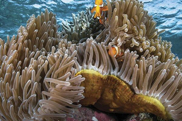 The Solomon Islands, often seen as a global center for marine diversity, is also supporting this call.