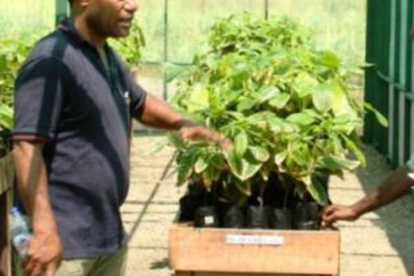 Dr John Konam (left), with cocoa seedlings at the Post-Entry Quarantine Facility.