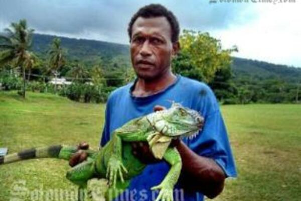 Iguana found by Lovonivonu villagers in Fiji. The reptile is new to the country and is an herbivore.