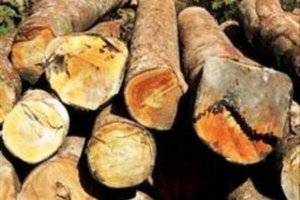 Mr Wale said that already the logging sector has not been able to sell all its harvested logs.