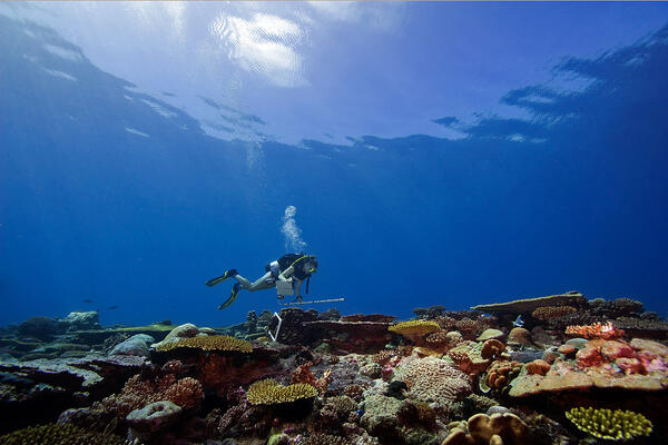 This massive international effort turned into the largest coral reef survey and mapping expedition in history, as the Foundation responded to requests from countries to study their coral reefs.
