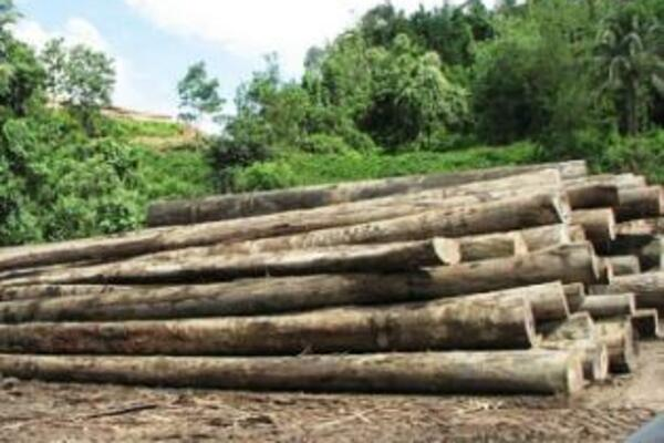 Paul Gruenwald, ANZ chief economist for the Asia Pacific, in an interview with Radio Australia, says that the strong growth is attributed to the logging sector.