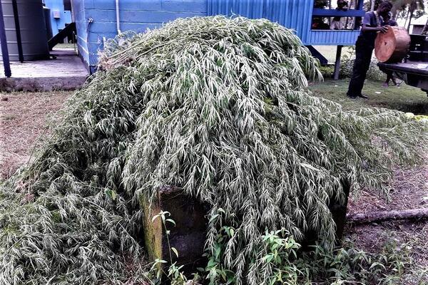 Police Uproot 121 Marijuana Plants