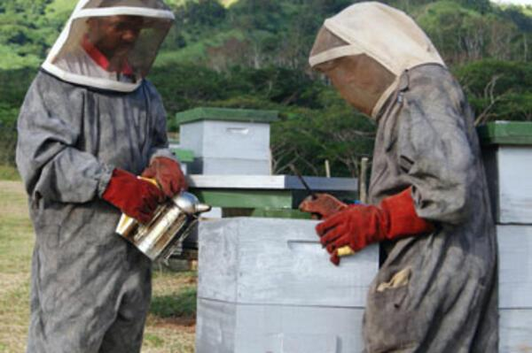 European Union Helps Boost Fiji's Bee Farming