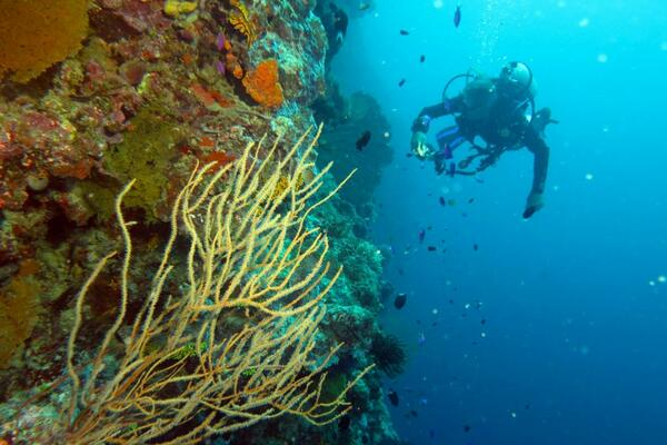 The Solomon Islands is renowned as one of the world's foremost dive locations.