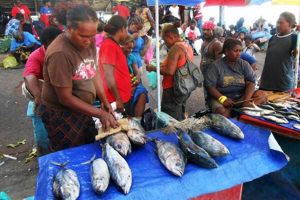 We estimate through our research at Auki Market in Malaita, Solomon Islands, that well over 100 tonne of fish caught across the province changes hands at the market in a year.