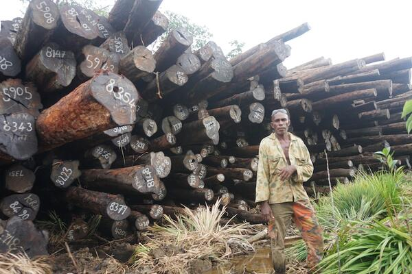 Chief Eric Gnokro of Lelegia village in front of a pile of illegally felled Tubi logs at Korona, San Jorge.