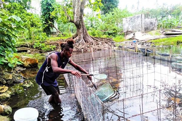 Charles says he plans to expand the tilapia farm further. He says he knows there are challenges, but he is now experienced enough to handle them.