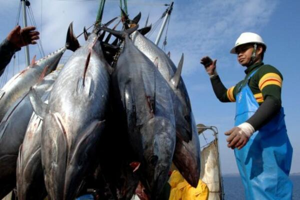 PNA waters account for around half of the world's global supply of skipjack tuna, the most commonly canned tuna.