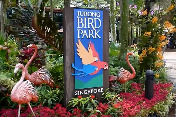 Jurong Bird Park is a world-famous bird zoo where there are specimens of magnificent bird life from around the world.